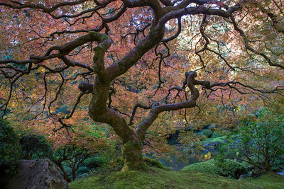 Portland Japanese Garden Fall 2013