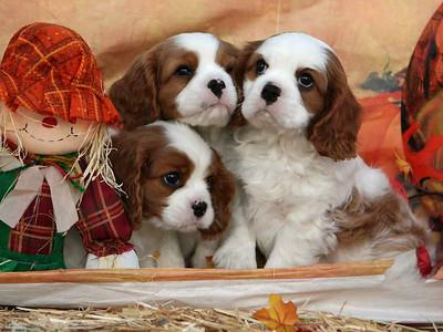 Johns' Puppies Aug. 22, 2009