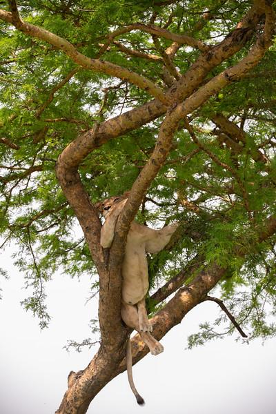 Uganda_T_QE-1461.jpg