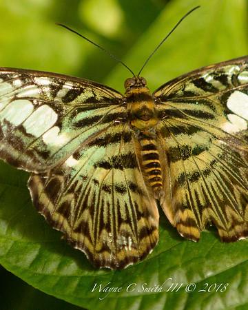Hershey Garden Butterflies