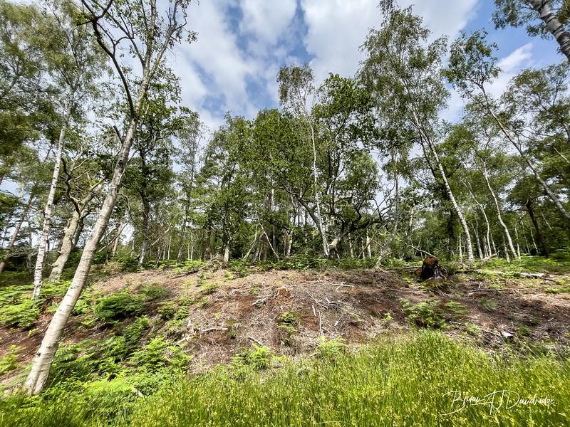 Burton Mill Pond-1134-1.jpg