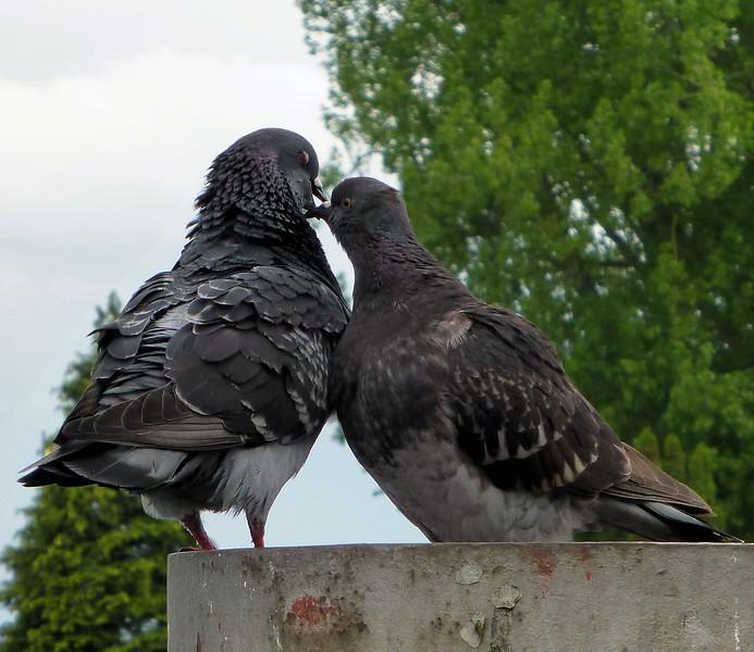 Day4-Lindau-Bickering Birds.jpg