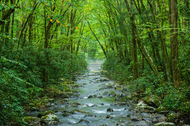 The Oconaluftee River seen from the bridge to the Kephart Prong trailhead, in Great Smoky Mountains National Park, September 25, 2018. (Joseph Forzano / Deep Creek Films)