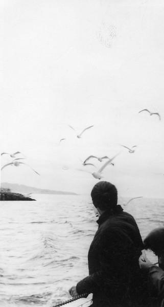 Scotland sea watching