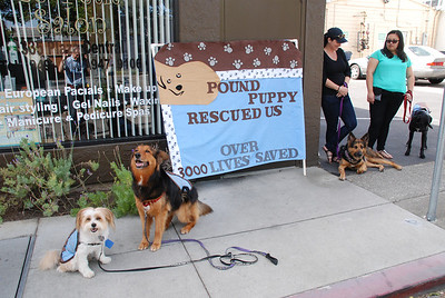 Los Altos Pet Parade 2014
