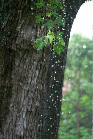 Summer Rainstorm