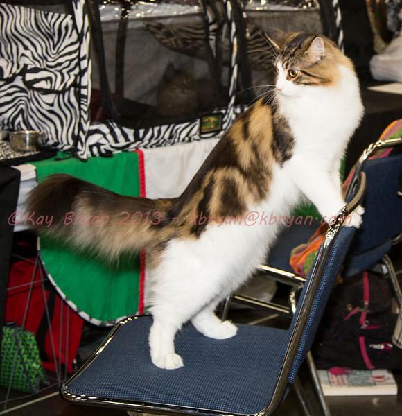 CatShow2014011.JPG
