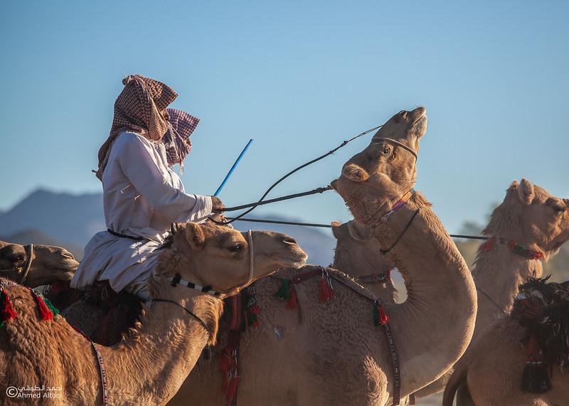 IMG_1220 copy- Camel Race.jpg