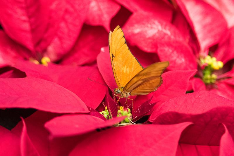 butterfly-196.jpg