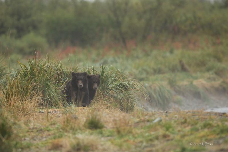20140905-_Q2C0409Katmai-Bears-Kinak-Edit.jpg