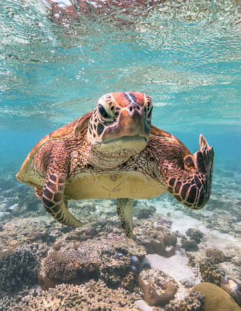 Is Terry the Turtle flipping the bird?!