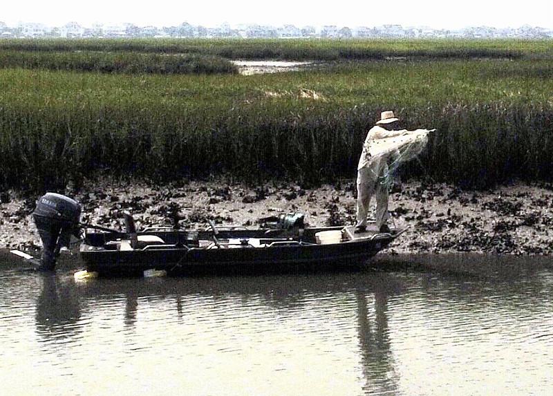 Oyster Catcher