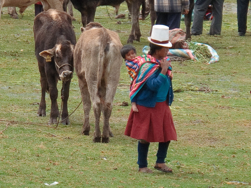 Selling her Cows