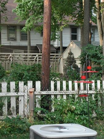 2004 Backyard