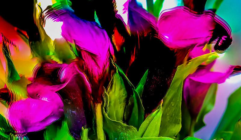 Purple Calais Lily 3.jpg