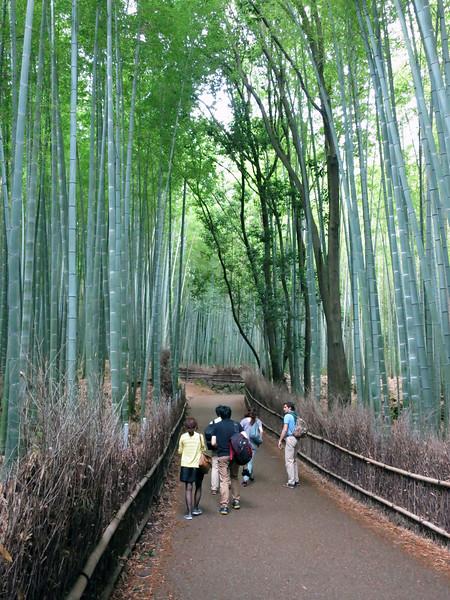 1965 Bamboo forest.jpg