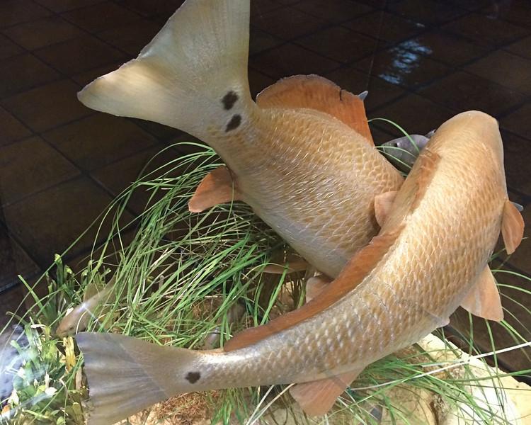 Port Aransas Red Fish.  Dale Langston