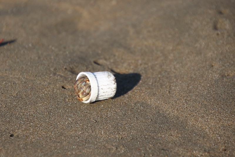 Hermit crab adopting a plastic top on the beach