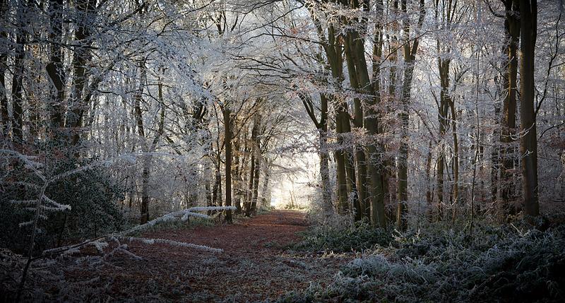 Hoar frost 6.jpg