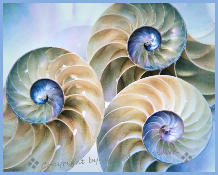 Nautilus Trio - Judith Sparhawk