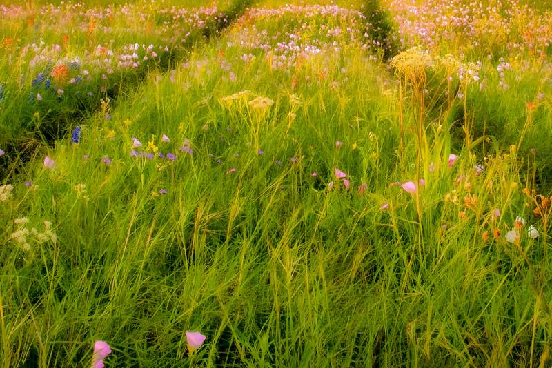 wild flower-3.jpg