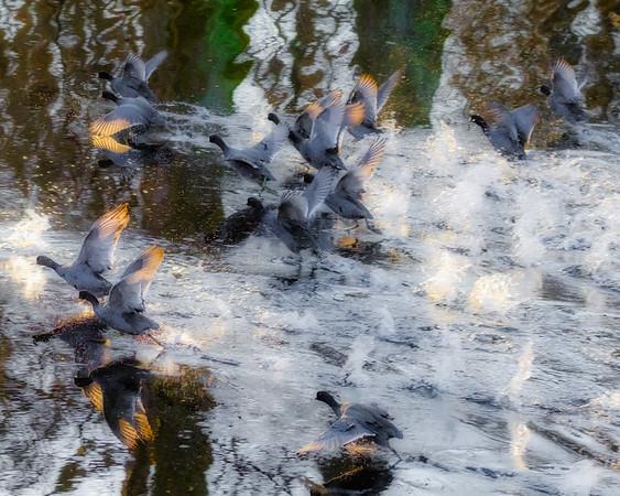 Wapanocca Duck Refuge