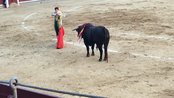 Bull fight Videos