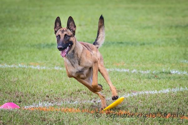 _MG_2858Up_dog_International_2016_StephaniellenPhotography.jpg