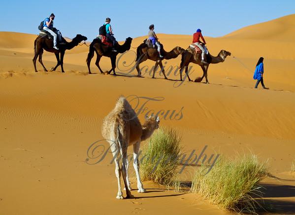 Morocco - Into the Sahara