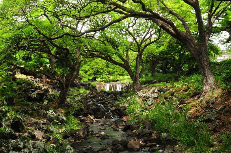 2012_Oahu_August_  0023.JPG