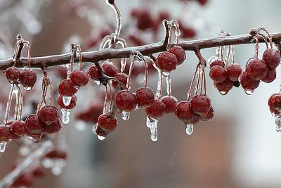 Ice, Feb. 7, 2020