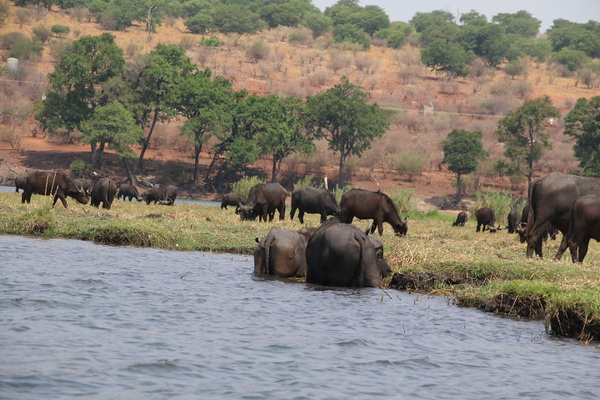 ZAMBEZI RIVER TOUR4.JPG