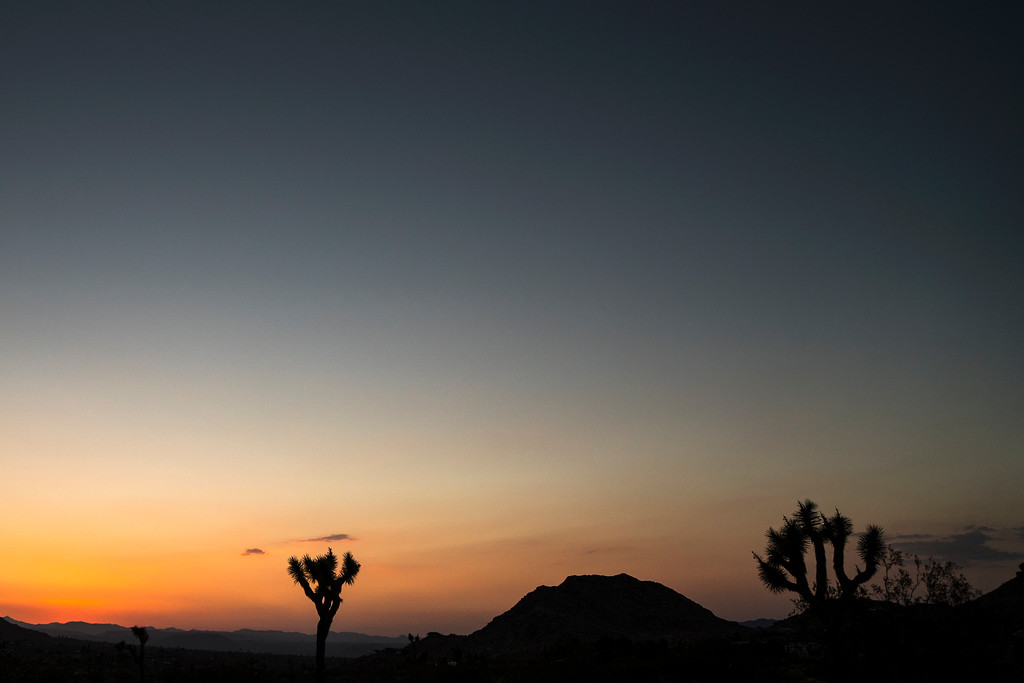 Sunset at Joshua Tree National Park near Palm Springs in Mojave Desert, California