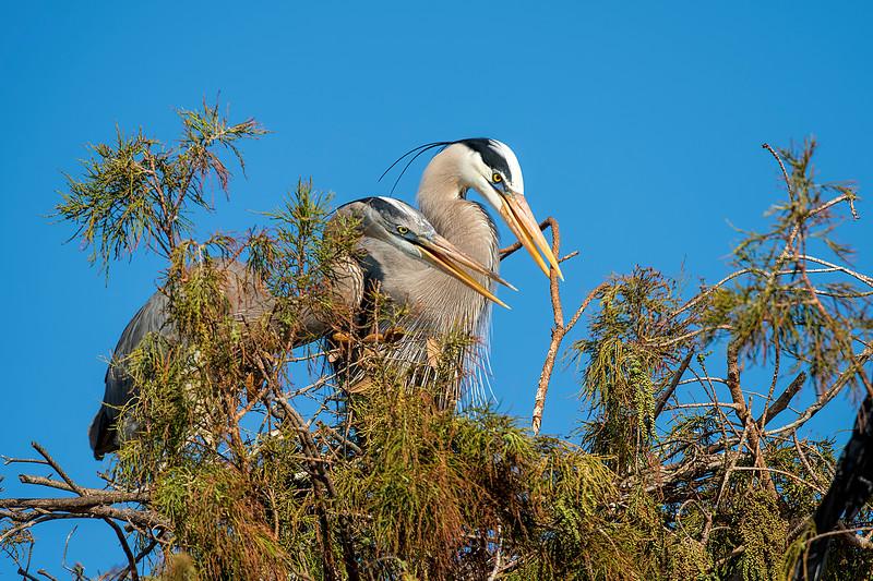 Nesting  #1370