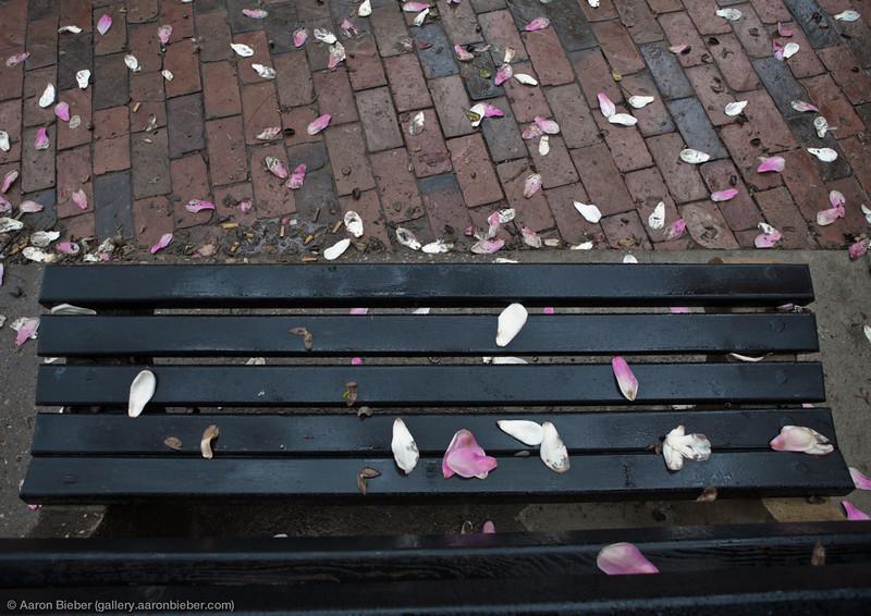 Park Bench, Petals