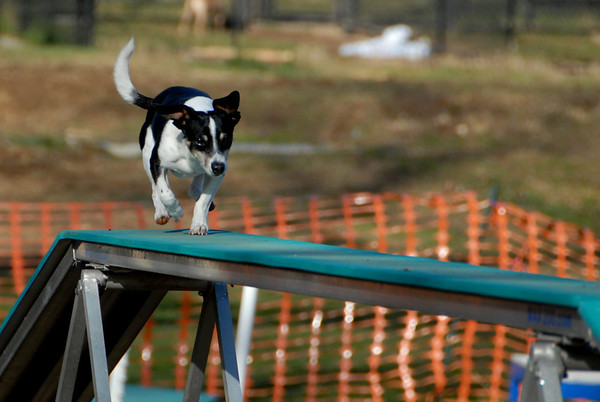 2012-01-01 New Years Day Agility Practice