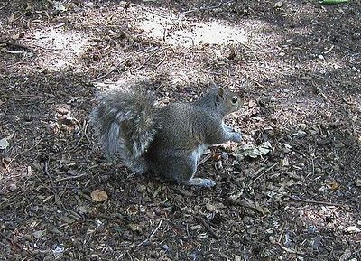 Autumn Deric Edie Rob Squirrels  2005