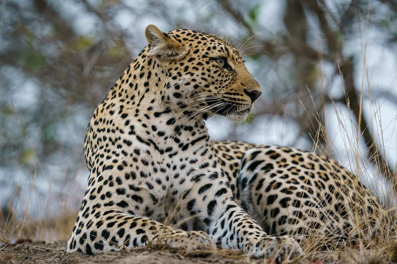 LeopardHills-20180929-0212.jpg