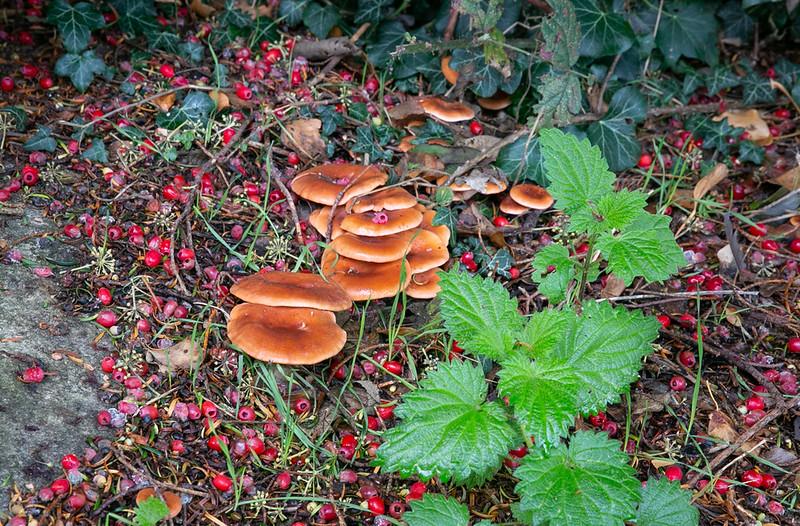 20191109- FNRC Fungi Walk - 048.jpg