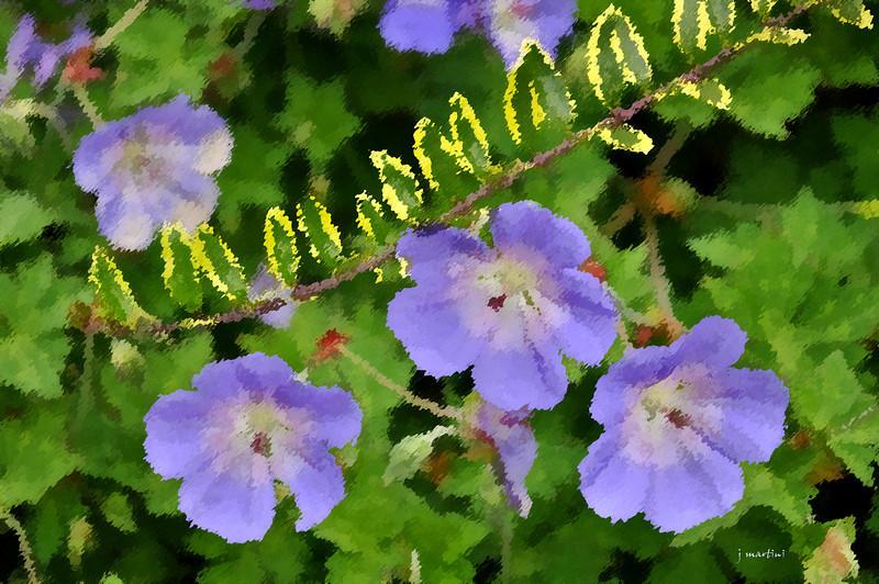 dream gardens 10 2-5-2011.jpg