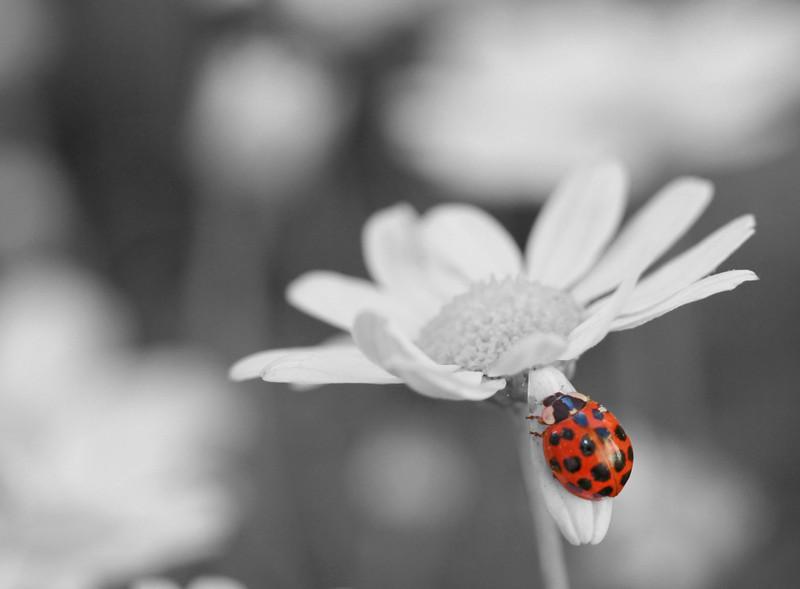 ladybug 5.jpg