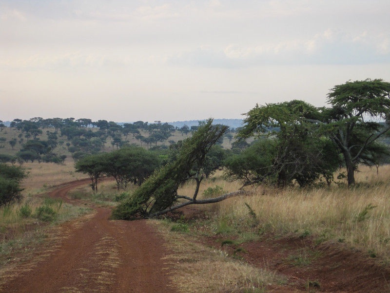 Rwanda_17_ixus-9467.jpg