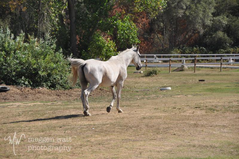 EB&Horses-115.jpg