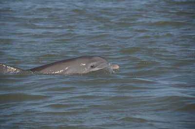 022421 Dr. Dara Orbach - Dolphins