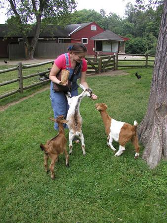 Friendly Farm June 2004