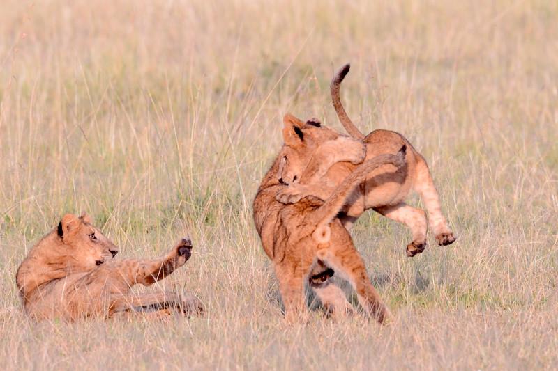 20160215__KET7771_Serengeti_Day_7.jpg