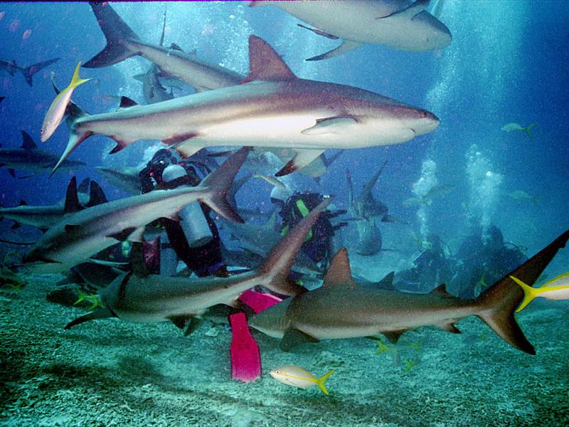 Shark 7.JPG