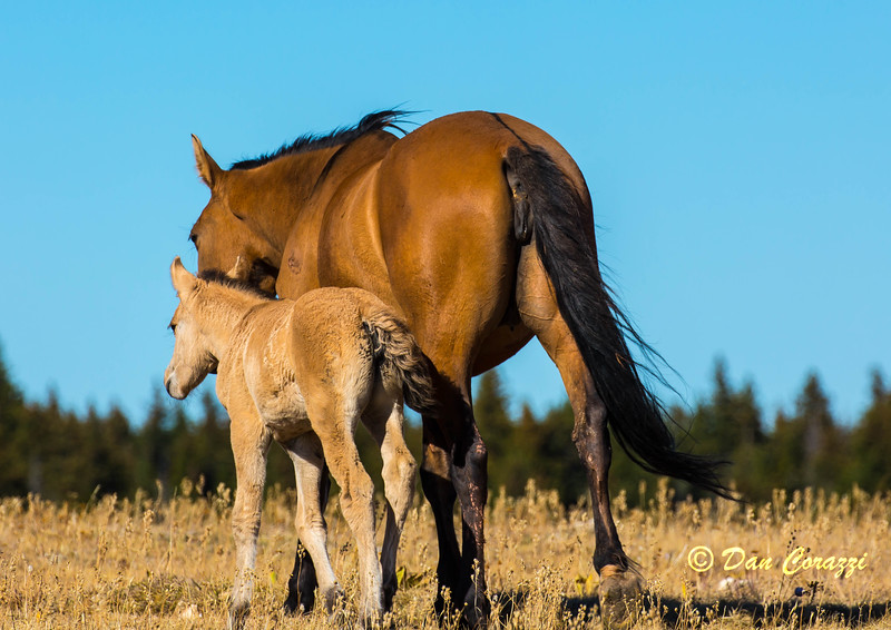 Mama and Colt-1a.jpg