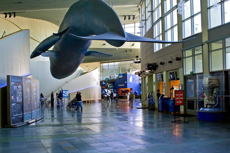 LB-Aquarium-II_02.jpg