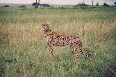 Maasai Mara 1988